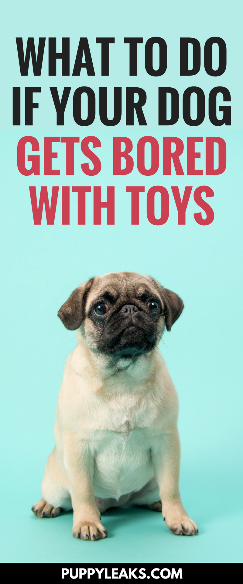 What to do if your dog gets bored with their toys