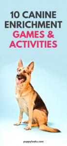 canine enrichment activities