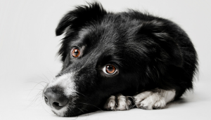 Household Items That Are Toxic to Dogs