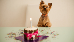 10 Fun Ways to Celebrate Your Dog's Birthday