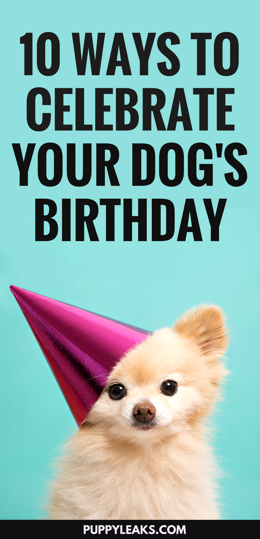 10 Fun Ways To Celebrate Your Dogs Birthday