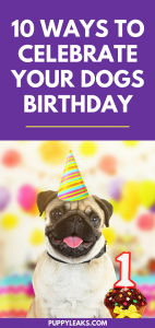 Celebrate dog birthday