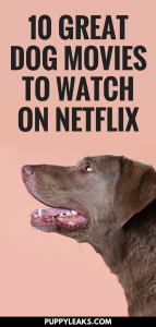 10 Dog Movies to Watch on Netflix