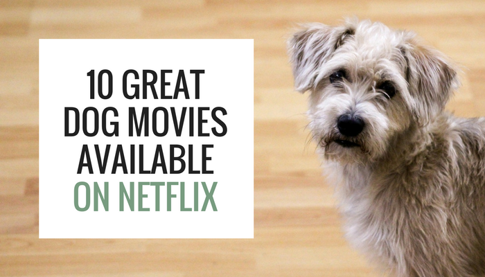10 Great Dog Movies Available on Netflix - Puppy Leaks