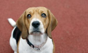 5 Dog Training Lessons I Learned The Hard Way