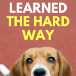 Dog Training Lessons I Learned The Hard Way