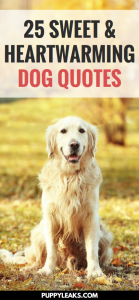25 Sweet & Heartwarming Dog Quotes