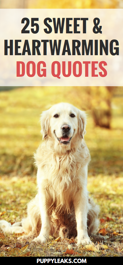 Our dogs enrich our lives in so many ways. They cheer us up when we're feeling down, they're loyal, and they're always happy to see us when we come home. These quotes are a great reminder of how much love and joy our dogs bring to our lives. Here's 25 of my favorite sweet & heartwarming dog quotes. I hope you enjoy them as much as I do. #dogs #quotes #dogquotes #dogstuff