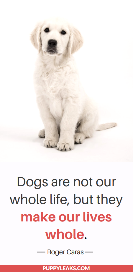 25 Sweet & Heartwarming Quotes About Dogs