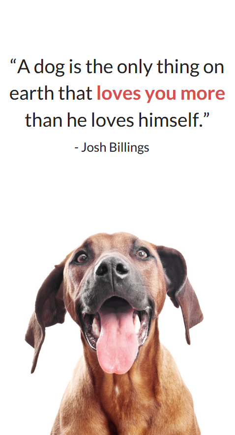 26 Heartwarming Dog Quotes