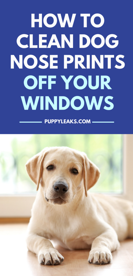 How to clean dog nose prints off your windows