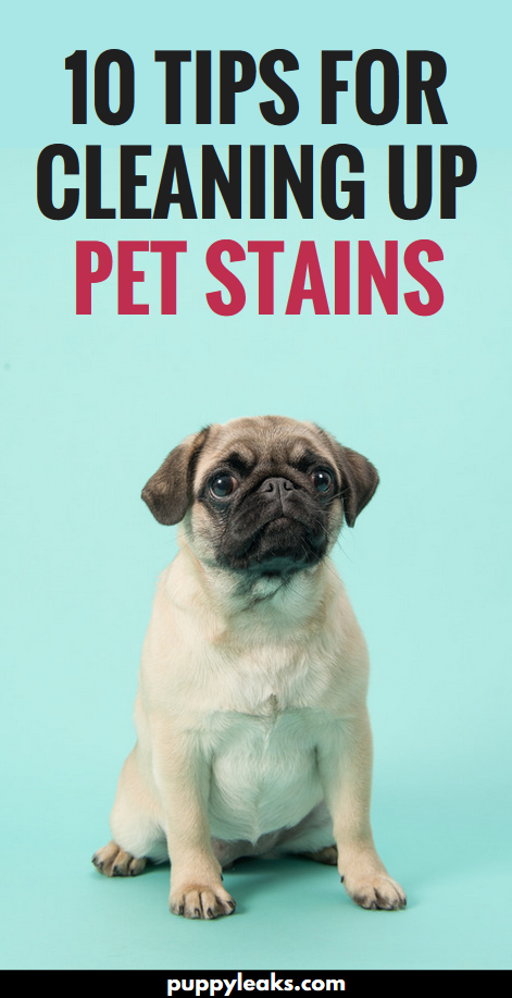 10 tips for cleaning up pet stains. From making your own DIY pet stain remover with vinegar and water to using a blacklight to illuminate old stains, here's 10 tips for cleaning up pet stains. #dogs #puppies #dogstuff #dogtips