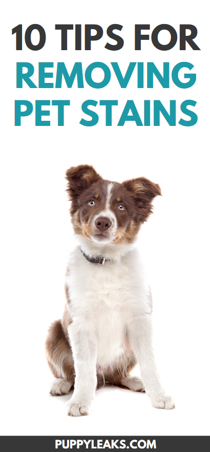 Tips for removing pet stains