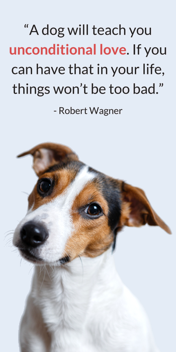 Heartwarming Quotes About Dogs