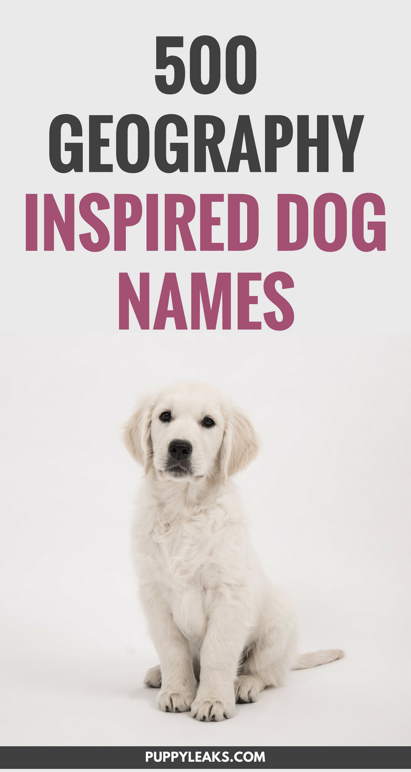 500 Geography Themed Dog Names