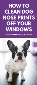 How to clean dog nose prints and drool off your windows