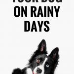 10 Ways to Exercise Your Dog on Rainy Days