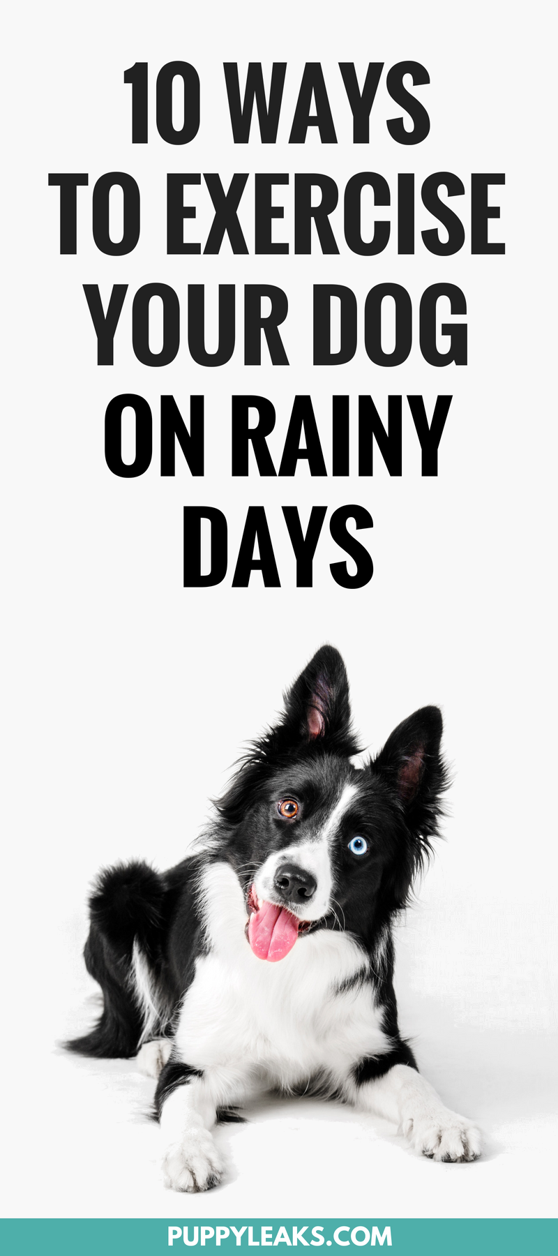 10 Ways To Exercise Your Dog On a Rainy Day