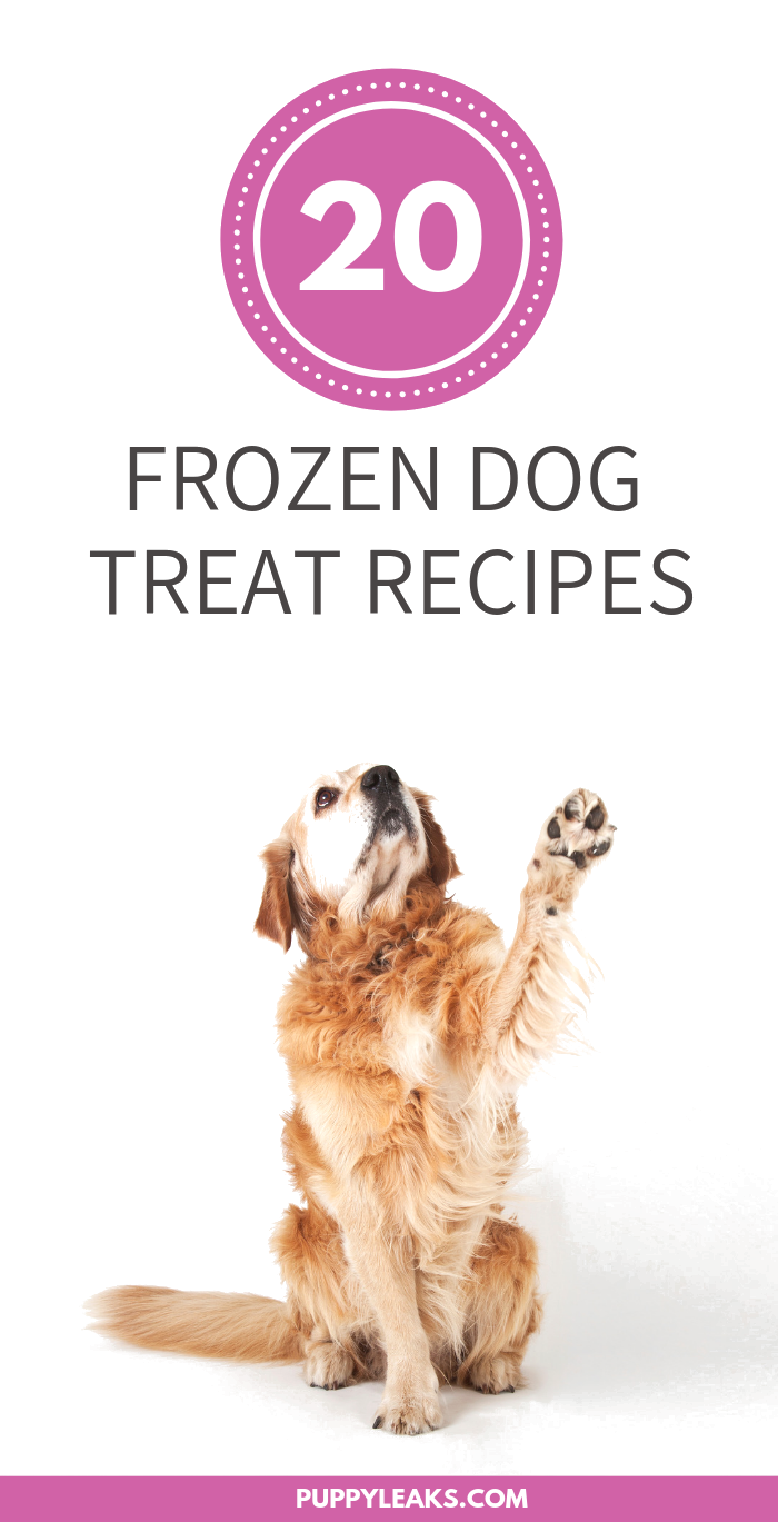 20 Frozen Dog Treat Recipes