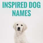 500 Geography Inspired Dog Names