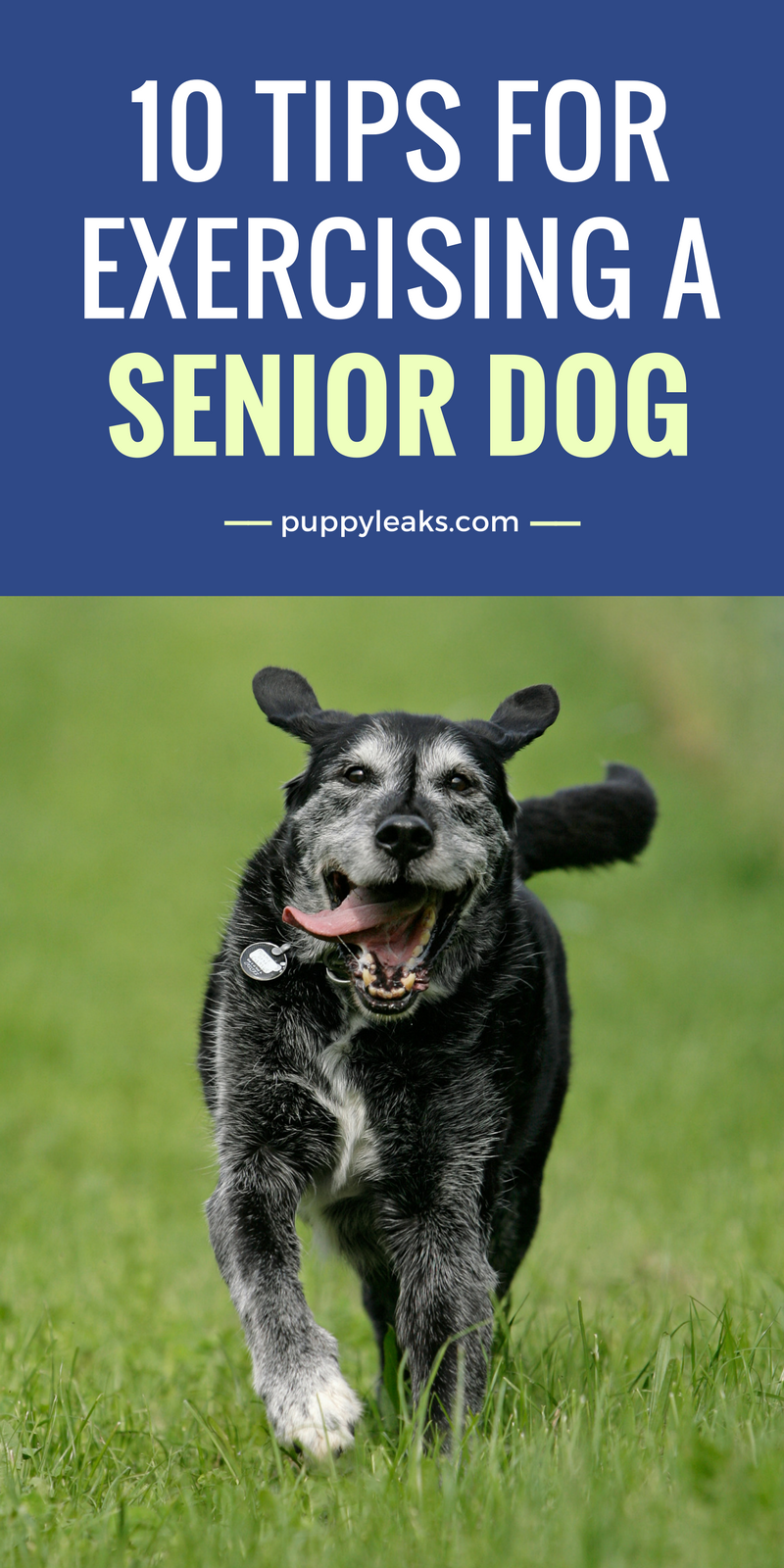 10 Tips For Exercising a Senior Dog