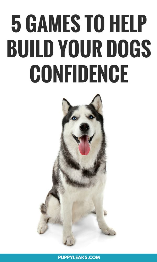 Is your dog shy and fearful around strangers, other animals and new situations? One thing that helps boost a dog's confidence is experiencing new things in a positive way, and playing games is a fun way to accomplish that. From targeting to interactive play, here's 5 games that will help build up your dog's confidence. #dogs #doggames #puppies #dogtraining