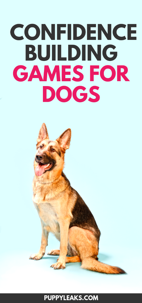 5 Confidence Building Games For Your Dog