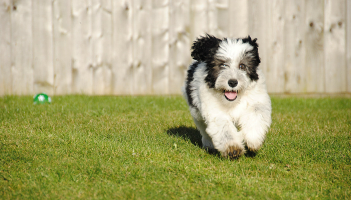 5 Confidence Building Games For Dogs