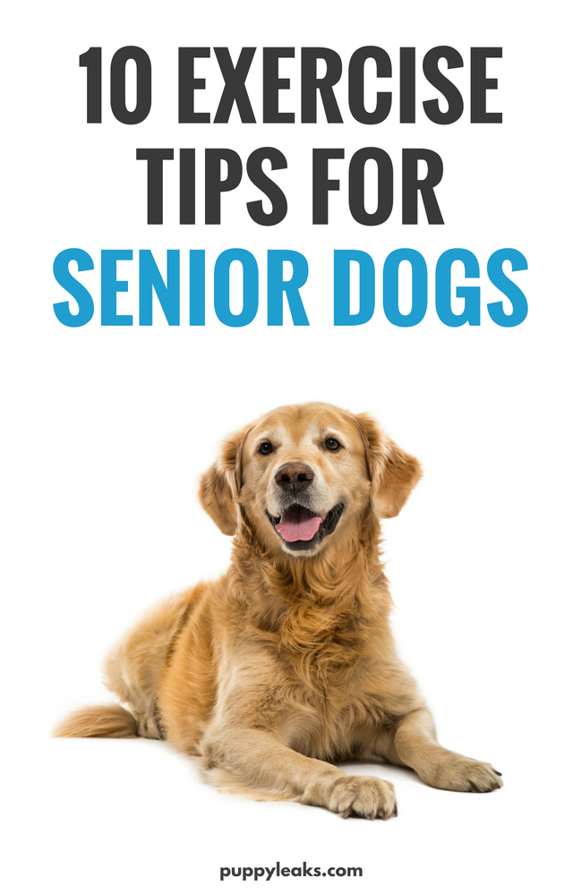 How to exercise your senior dog. Keeping our dogs active and in shape is key to their overall well being, and that includes seniors. Here's 10 tips for keeping your older dog active and in shape, including plenty of low impact exercise ideas and sings of pain to look out for. #dogs #dogcare #dogexercise #dogtips