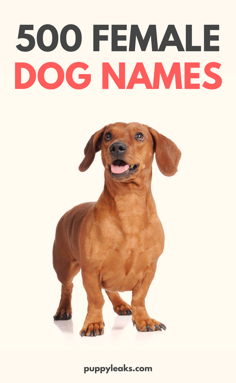 500 Popular Female Dog Names Puppy Leaks