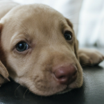 500 Popular Male Dog Names