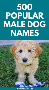 Popular Male Dog Names