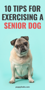 Tips for exercising senior dogs