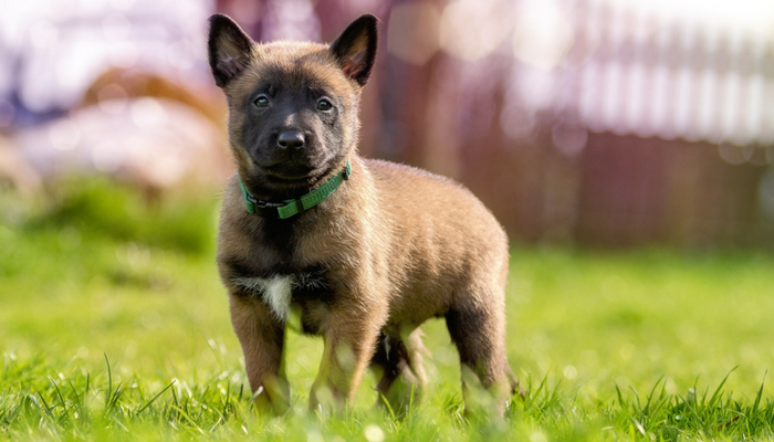 Fun and Easy Training Games For Puppies