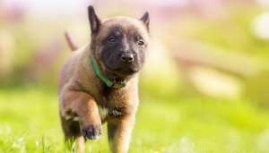 5 Easy Puppy Training Games