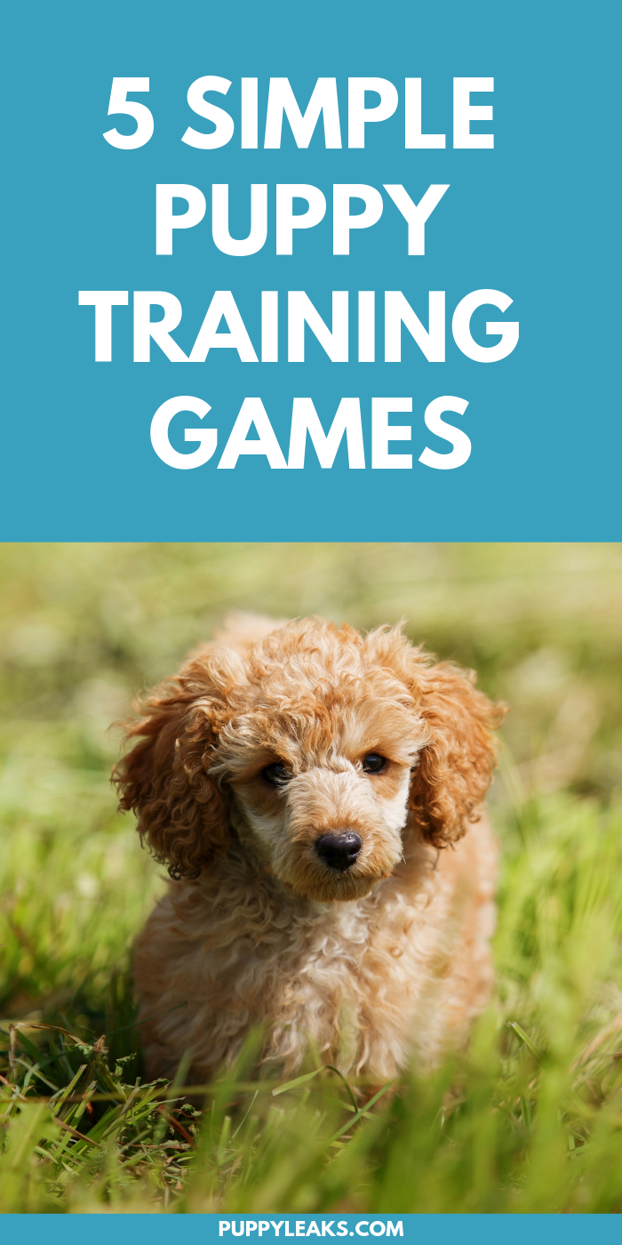 5 Easy Puppy Training Games