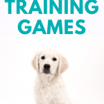 5 Fun & Easy Puppy Training Games