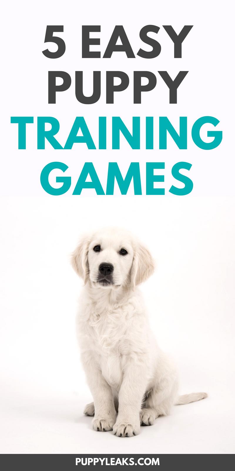 5 Fun & Easy Puppy Training Games