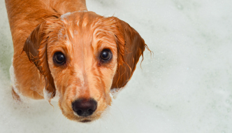 How to make bath time easier on your dog