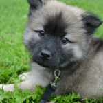 500 Cute Puppy Names
