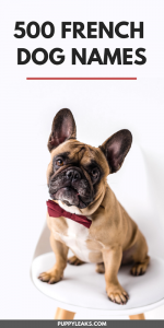 500 French Dog Names