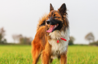 5 Simple Ways to Improve Your Dogs Life