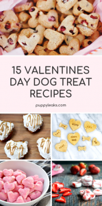 15 Valentine's Day Dog Treat Recipes