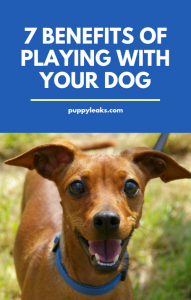 Benefits of Play for Dog