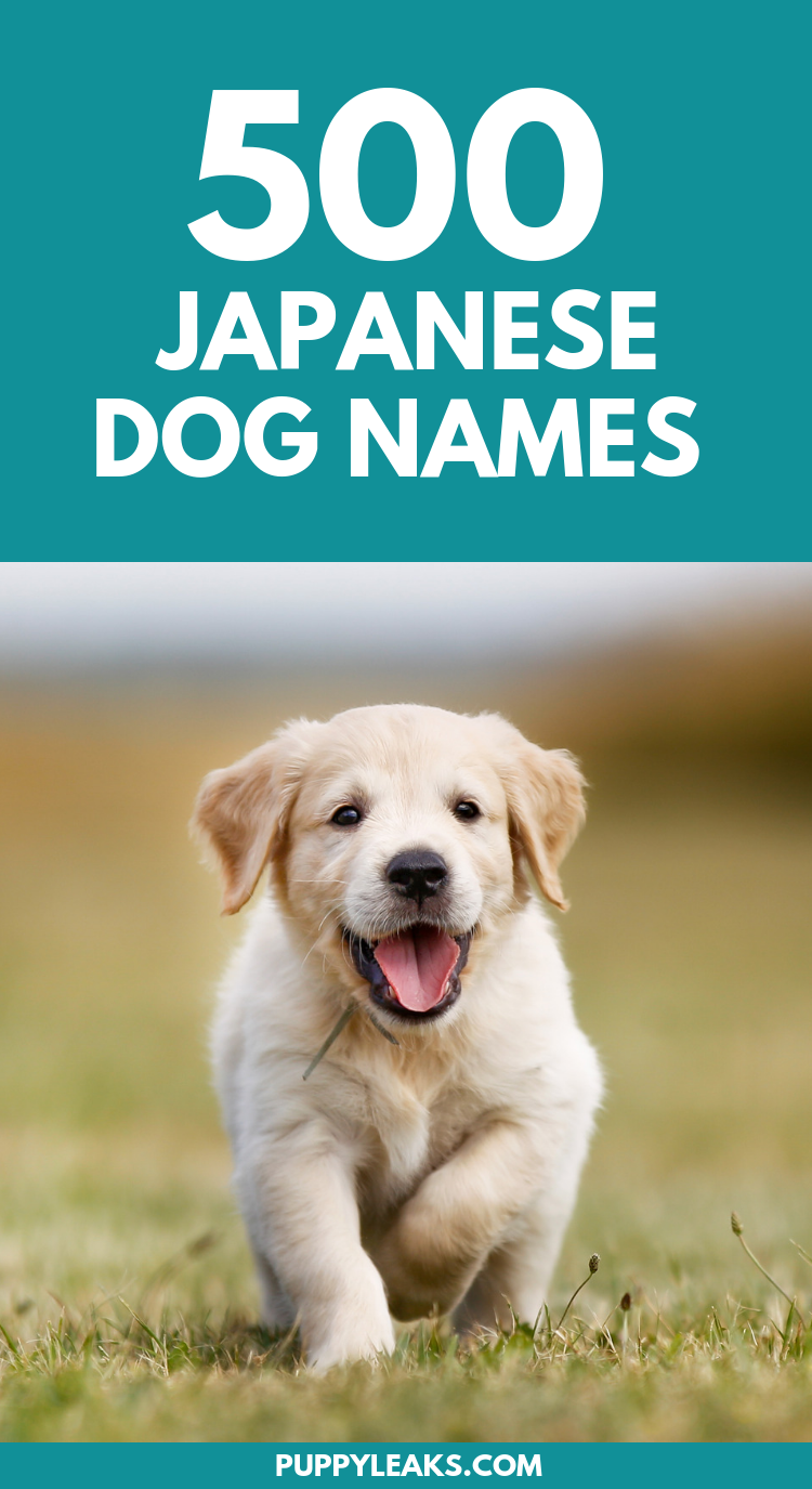 500 Japanese Dog Names - Puppy Leaks