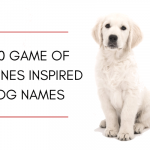 250 Game of Thrones Inspired Dog Names