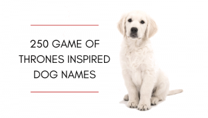 350 Game of Thrones Inspired Dog Names
