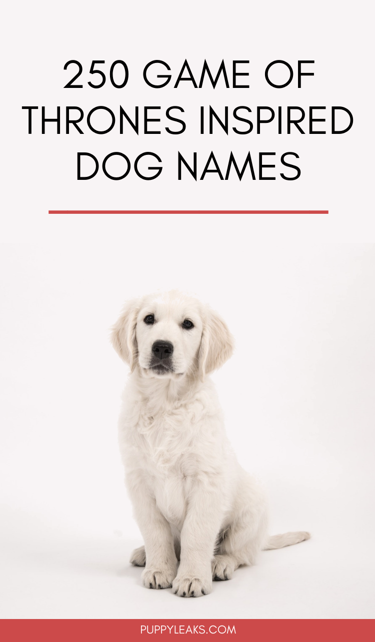 Game of Thrones Inspired Dog Names