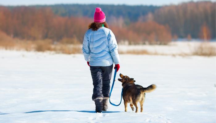 """Comment enseigner à votre chien une bonne laisse Maners """"width ="""" 700 """"height ="""" 400 """"data-pin-description ="""" Comment apprendre à votre chien à marcher agréablement en laisse """"srcset ="""" https://www.puppyleaks.com /wp-content/uploads/2019/12/walkingsnow.png 700w, https://www.puppyleaks.com/wp-content/uploads/2019/12/walkingsnow-300x171.png 300w, https: //www.puppyleaks .com / wp-content / uploads / 2019/12 / walkingsnow-332x190.png 332w """"tailles ="""" (largeur max: 700px) 100vw, 700px"""