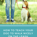 How To Teach Your Dog to Walk Nicely on the Leash